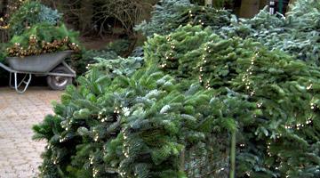 Schnittgrün im Advent