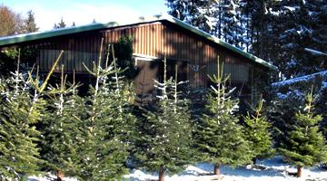 Gutschein für einen Weihnachtsbaum